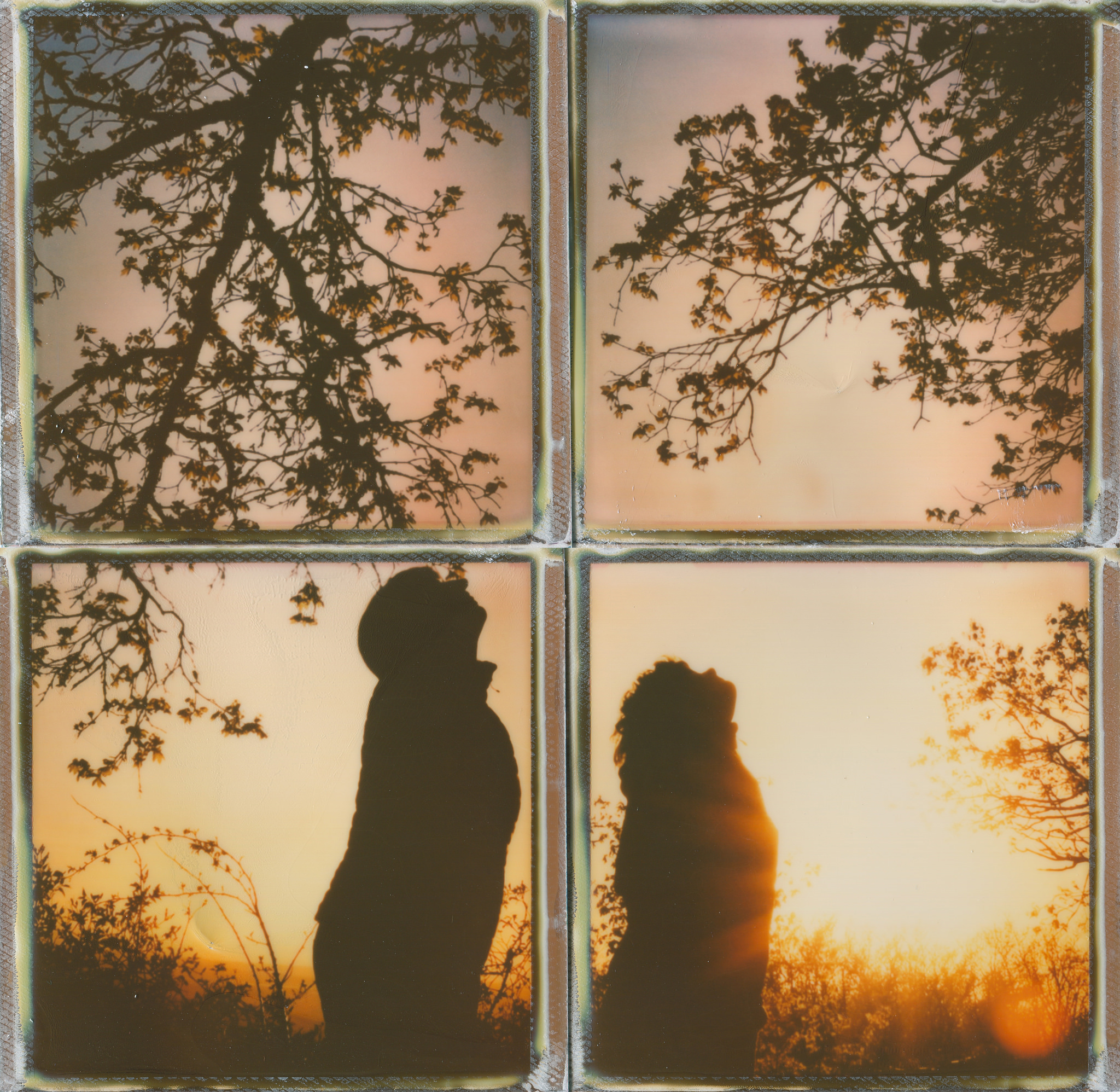 Photo information: Film type: Type 600. Film manufacturer: impossible project . Film name: pioneer color 600 film gen2 . Alias: .